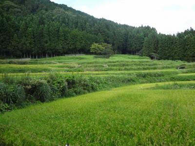 額井岳 138 (640x480)