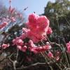 梅香る、ウグイス来りて、春三昧。