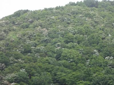 三十三間山 128 (640x480)