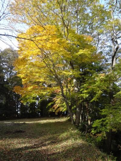 高取山 134・オオモミジ (480x640)