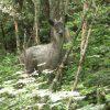 山で出会った動物。
