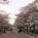 万博公園に花見に行ってきた。