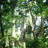 アマゾンの密林は、地球の酸素の20%を生産している訳ではないようだ。