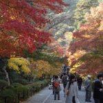 日本は、この1週間が耐えれるかの分かれ目。