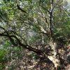 歌垣山  (2) ~コースと樹木~